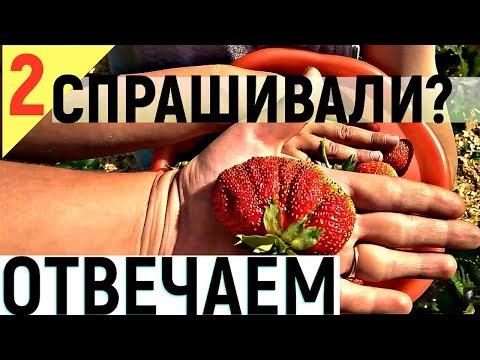 КЛУБНИКА ИЗ СВОИХ СЕМЯН  - СТАРЫЕ СОРТА КЛУБНИКИ!