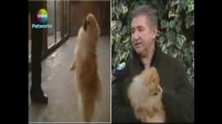 Maltese, Yorkshire Terrier Ve Pomeranian Cinslerini Can Paksoy Anlatıyor