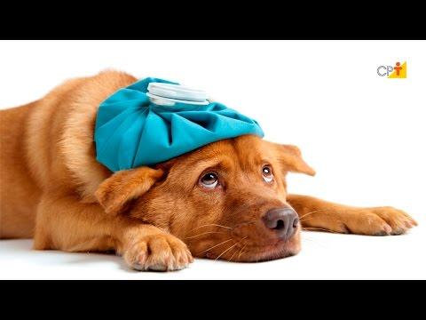 Curso Primeiros Socorros para Cães e Gatos - Principais Acidentes