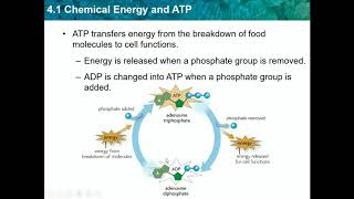 Biology CH 4.1 - Chemical Energy and  ATP