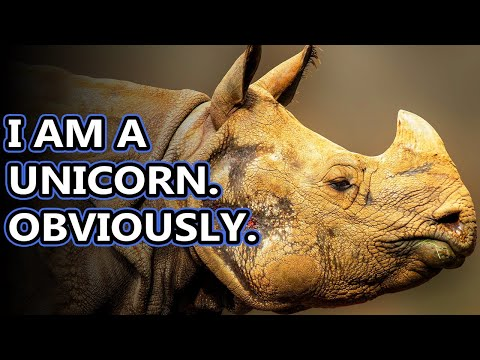 Rhino Facts: The World's Living Unicorn | Animal Fact Files