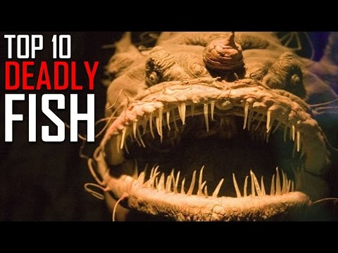 Top 10 Most Deadly Fish In The World