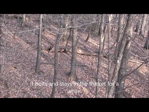 Deer Archery Hunting Southeast Minnesota
