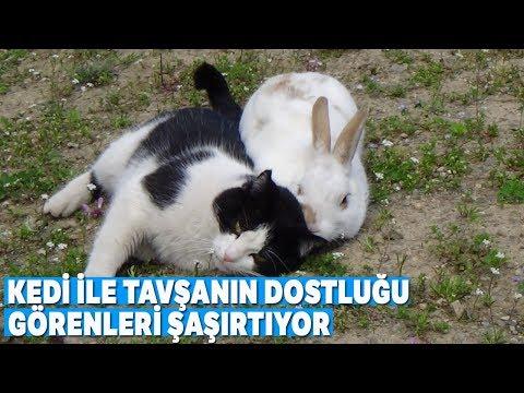 Kedi İle Tavşanın Dostluğu Görenleri Şaşırtıyor