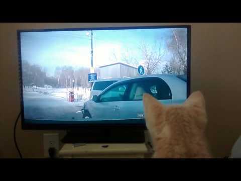 Cat Loves Watching Dash Cam Videos