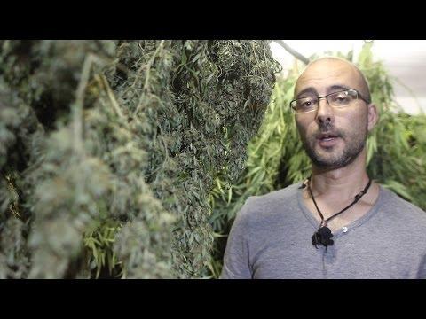 Marihuana Televisión News 17 - ExpoCannabis Madrid 2013