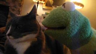 Sampson the cat hurts the frog.