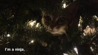 There's A Cat In The Tree