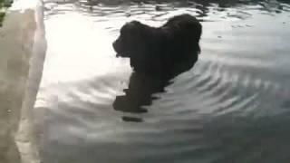 犬の毛がぷかぷかと浮いていて、あまり綺麗ではない、水溜まり的なプー...