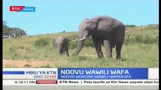 Ndovu wawili zaidi wafa katika mbuga ya Masai Mara
