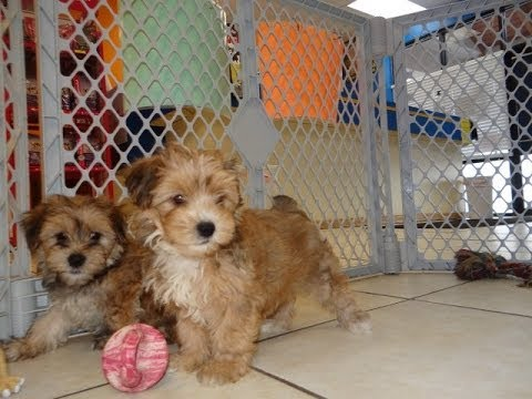 Cheap Dogs For Sale In Arizona