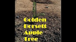 Planting and Irrigating Fruit Trees in AZ