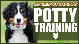 How To Potty Train Your BERNESE MOUNTAIN DOG