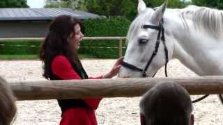 Horse Show, Haras, Cluny Abbey, France