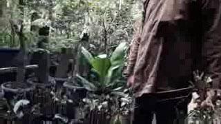 Video Pertumbuhan akar 1 - 2 bulan (nature stek) download MP3, 3GP, MP4, WEBM, AVI, FLV November 2018