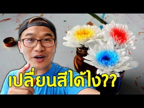 DIY เปลี่ยนสีดอกไม้ เจ๋งอ่ะ!!!