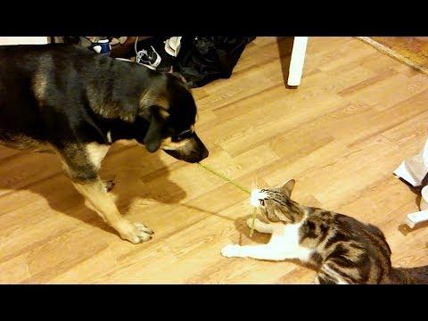 Süße und Lustige Tiervideos ( Teil 37)    ✪ Stern DuTube