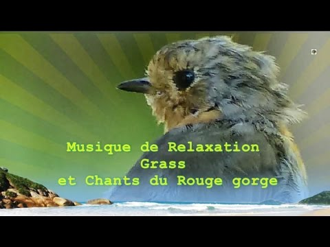 relaxation musique relaxante chants des oiseaux rouge gorge youtube. Black Bedroom Furniture Sets. Home Design Ideas
