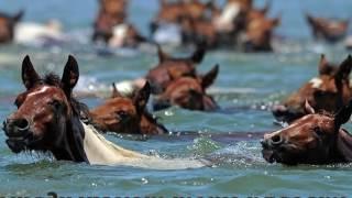 Песни нашей юности лошади в океане