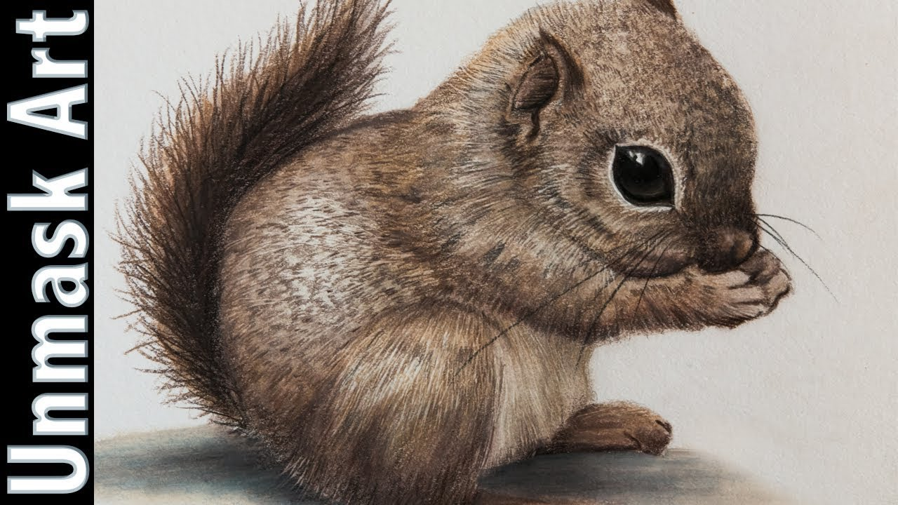 Baby Squirrel | Colored Pencil Drawing Time Lapse - YouTube