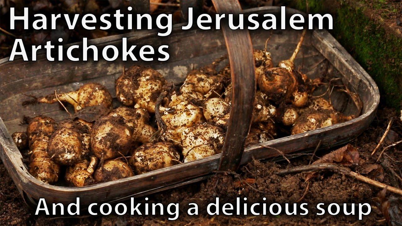 How To Cook Jerusalem Artichokes Soup