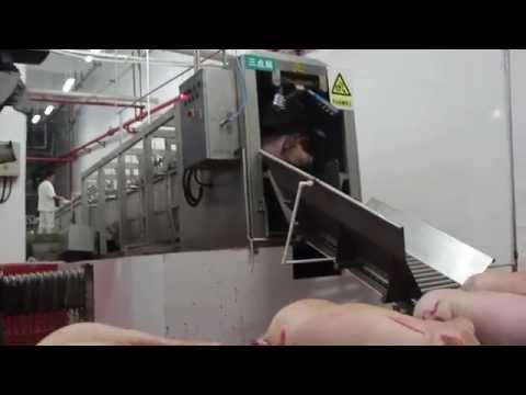 Pig abattoir three points stunning machine