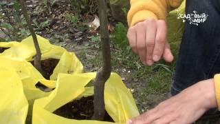 Когда сажать плодовые деревья и кустарники осенью и как + видео