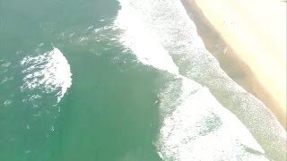 Great white shark and two dolphins spotted near Huntington Beach