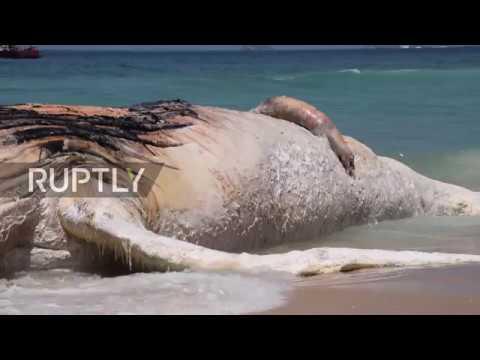 Brazil: 30-tonne whale found dead on Rio