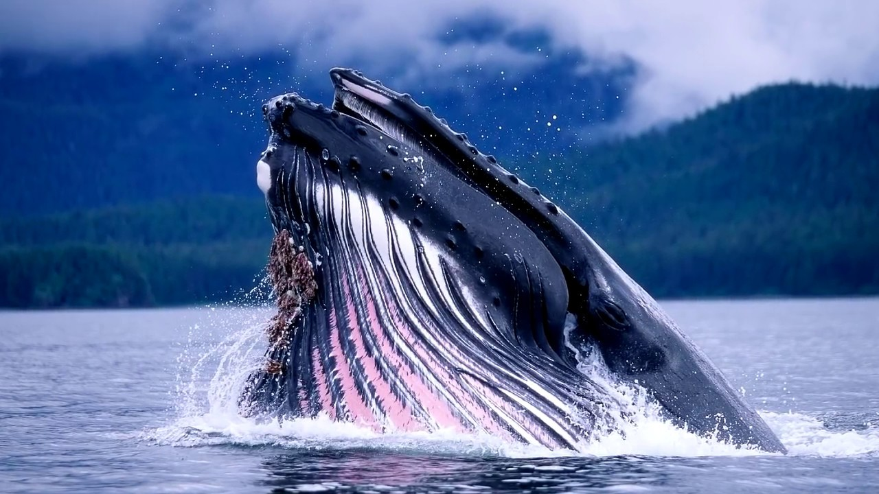 Blue Whales Are Extinct