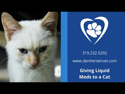 Stress Free & Hands Free Way to Give a Cat Liquid Medicine