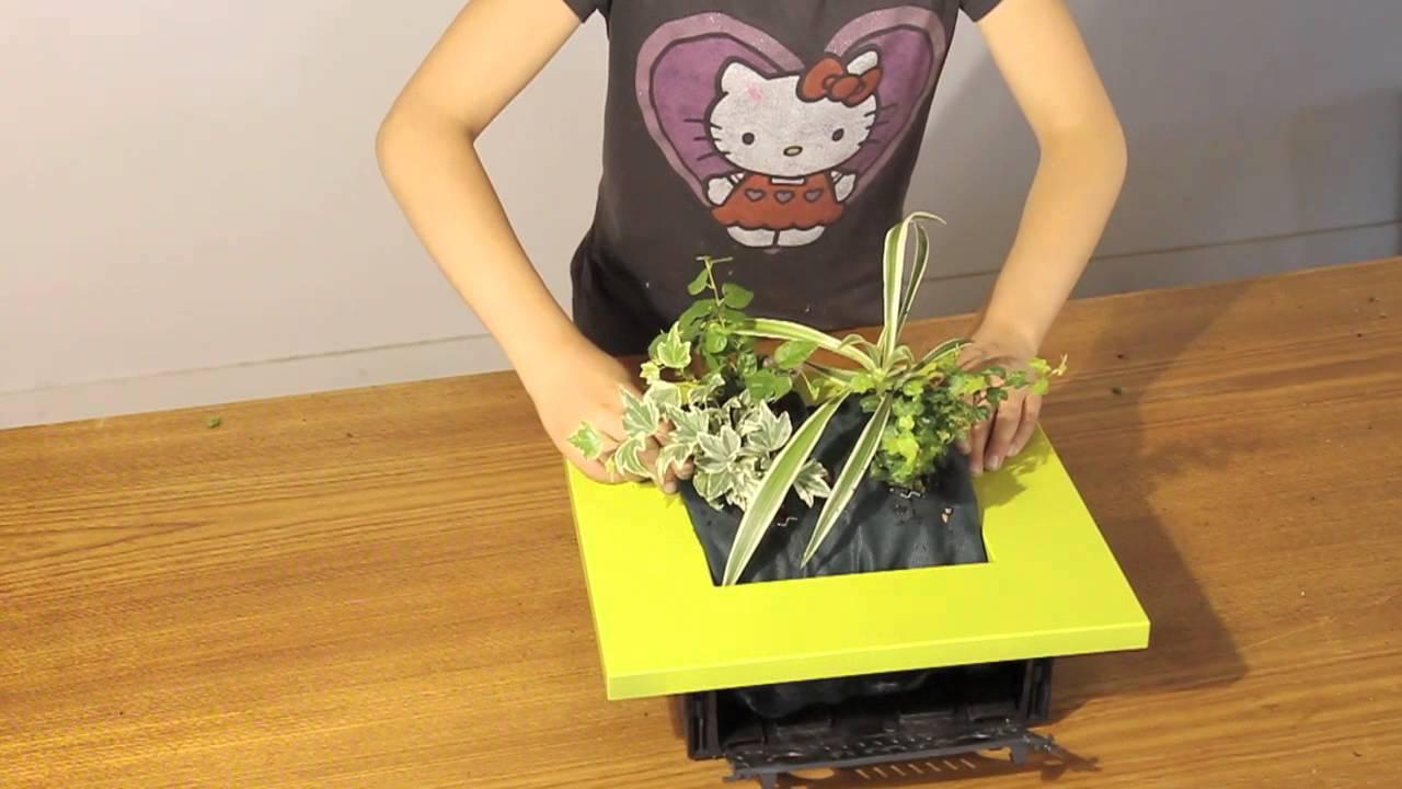 Planter un cadre wallflower c 39 est facile youtube - Cadre vegetal mural ...
