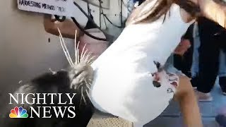 Viral Sea Lion Video Should Serve As Warning For Summer, Experts Warn | NBC Nightly News