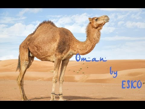 Oman Travel Clip by ESKO