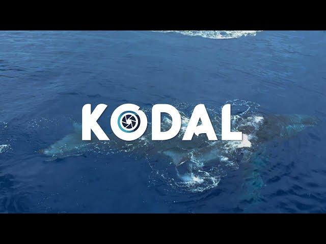 Programme KODAL:  aidez nous à connaître les baleines