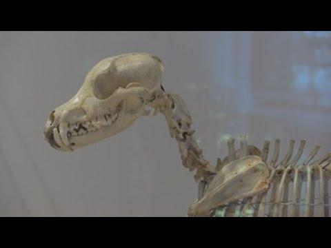 El Museo Del Perro Abre Sus Puertas En Nueva York Youtube