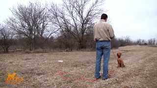 D.t. The Dog Training Video 9 | How To Teach Hand Signals/casting Drills To A Dog