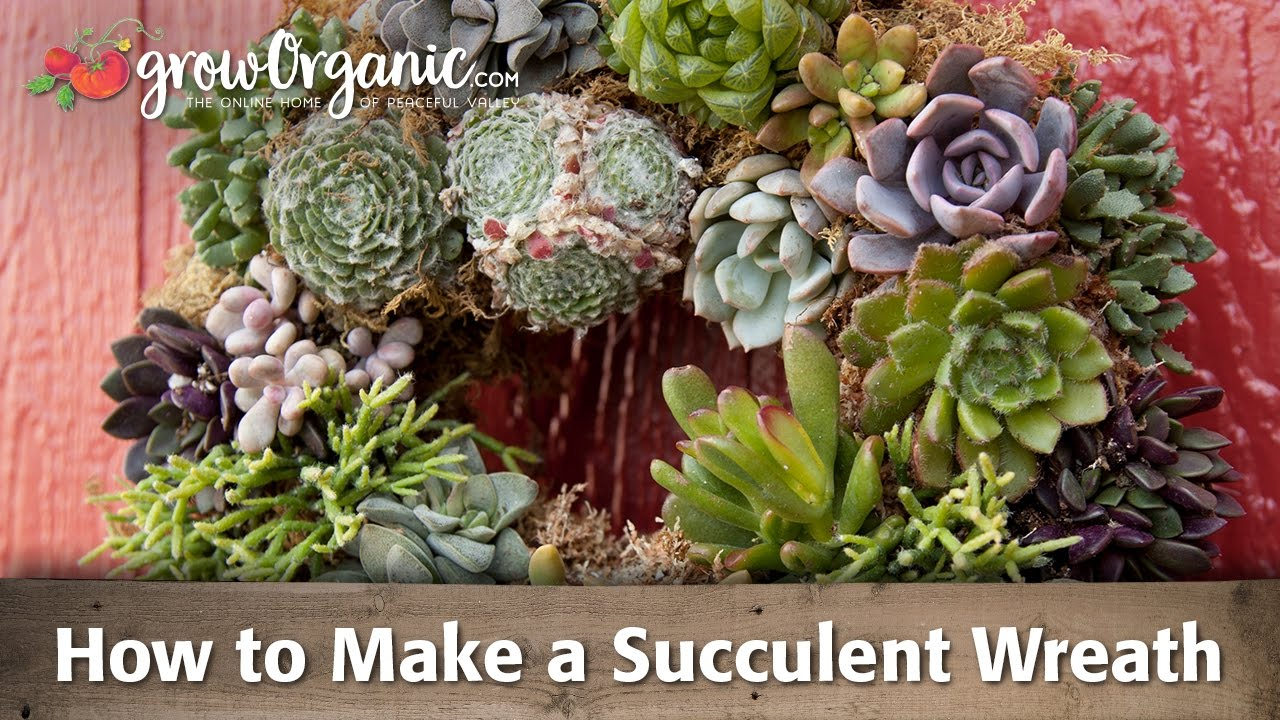 How To Make A Succulent Wreath You