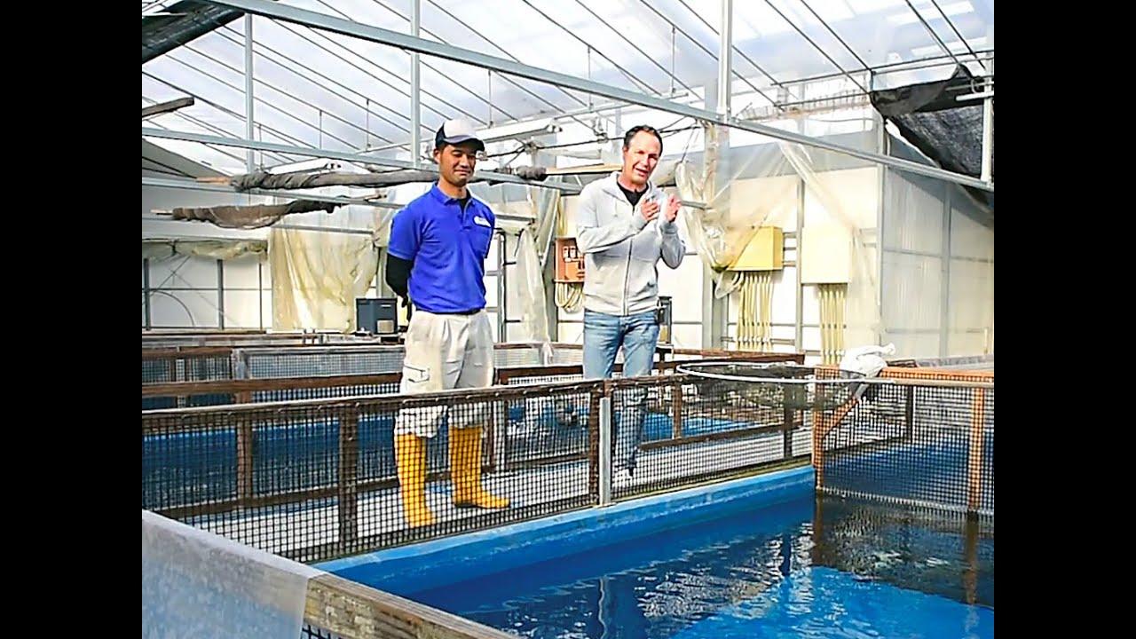 Modern koi blog 555 omosako koi farm doovi for Top japanese koi breeders