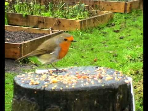 Community Garden Birds