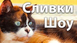 Сливки Шоу (Slivki Show) - ТОП 5 видео канала