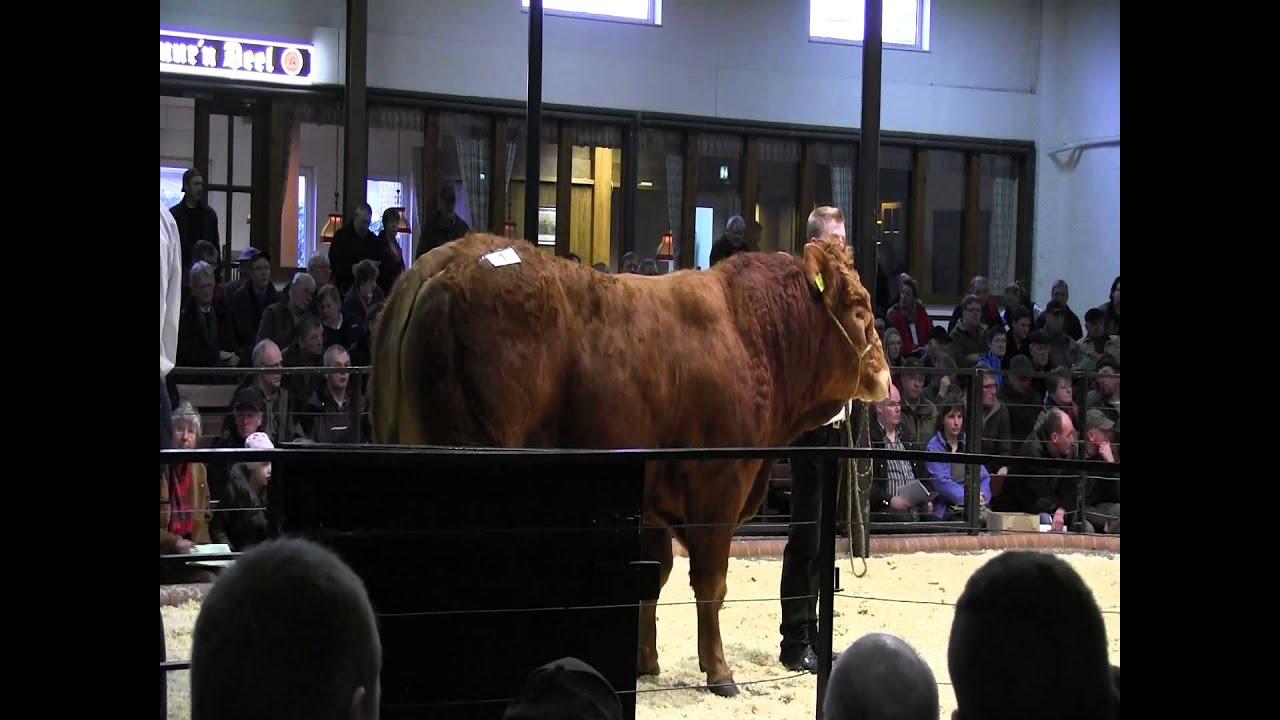 CATTLE.de: 3. Polled Limousin Sale RSH 076
