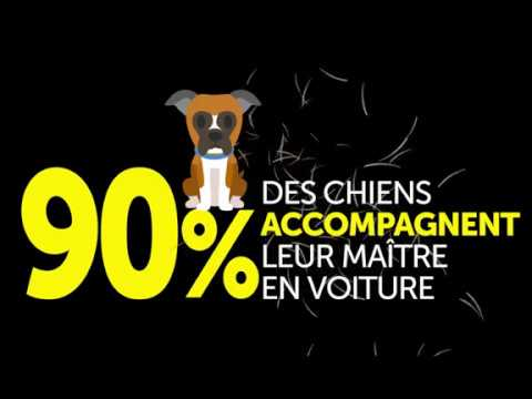 TCS Genève - Campagne néttoyage