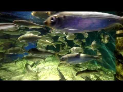 Fish Swirling in Circles Underwater
