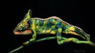 Люди в животном! Красивые позы и составления животных