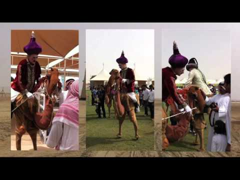 Camels in Bahrain
