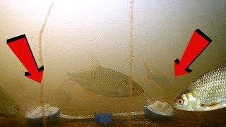Реакція риби на ВАНІЛІН!!! Підводна зйомка