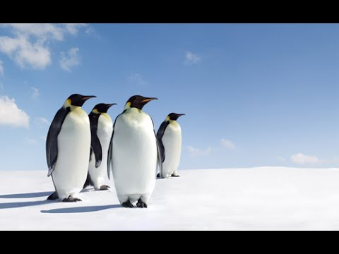 Antarctic Wildlife Adventures || Full Documentary with subti