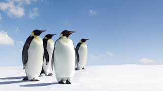Antarctic Wildlife Adventures || Full Documentary with subtitles