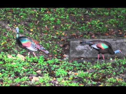 Guatemala Birds and other Creatures